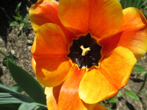 make your business bloom