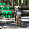 Your Biggest Blogging Challenge